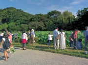 蓮の花を観る人々