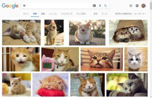 猫でgoogle画像検索