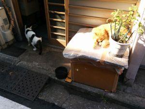 黄金町の猫