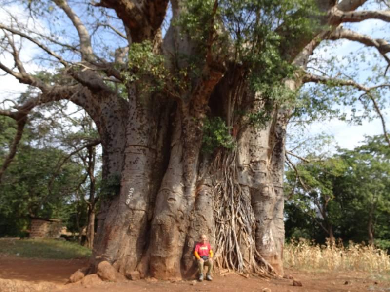 バーバの樹
